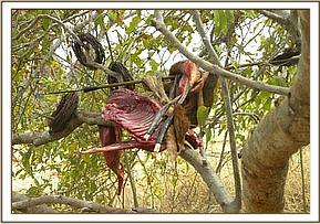 Bush meat and snares found at a hideout