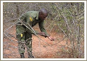 LIFTING SMALL SIZED SNARES AT MBULIA RANCH