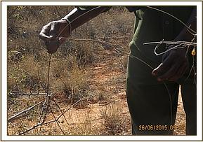 Team members came across snares in Kanziku