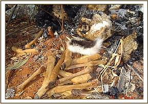 remains of bushmeat
