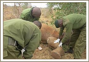 Both Simba team and Voi Veterinery attend