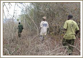 Poacher being led to the desnaring vehicle