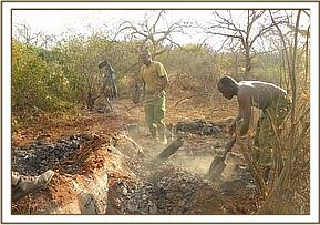 Destruction of charcoal kiln in the Triangle