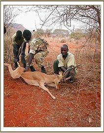 An Impala caught in a snare is rescued