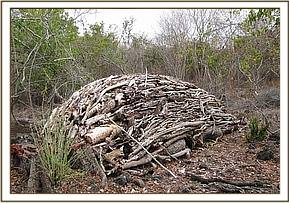 Pile of logged wood