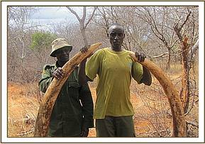 Tusks retrieved