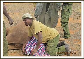 A baby elephant rescued