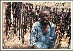 Arrested poacher and his drying lines