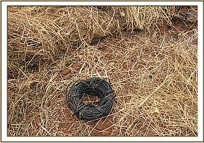 Vadalised telcom wires used to make snares