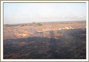 The burnt Ndara plains