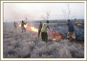 Team members help fight the fire at Ndara plains