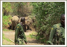 Elephants sighted during patrols