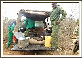 Baby elephant rescued by the team