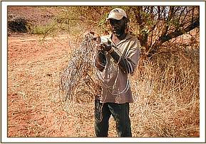 A poacher is arrested with snares