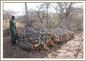 Pile of logged wood used for charcoal burning