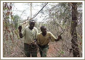 Members of the desnaring team removing a snare