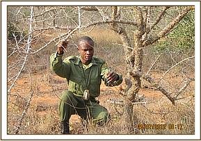 Team member lifting snares at Maktau area