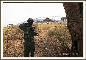 Removing snares used for poaching big game