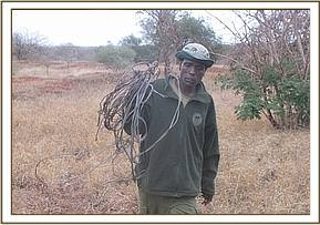 Team member with snares lifted fromTaita area