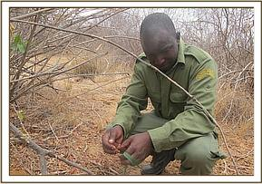 Lifted snares at Ithumba area