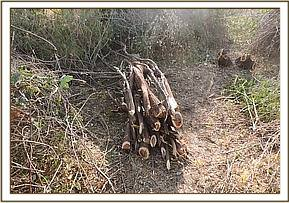 Pile of wet wood found near Voi Wildlife Lodge