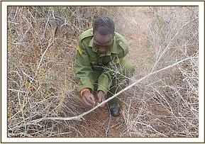 Snare lifting at areas of Kasala fenceline