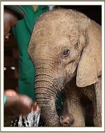 Emoli bekommt etwas Wasser