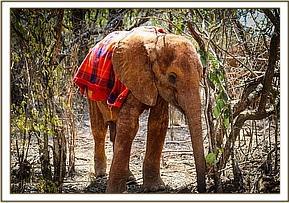 Emoli draußen im Busch