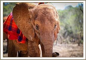 Der süße kleine Emoli