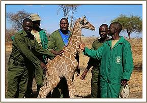 Keepers and vet team members with the baby giraffe