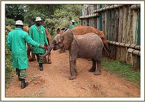 Pare's first day out with the other orphans