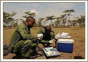 Der Tierarzt trifft Vorbereitungen