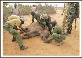 The Keepers prepare the orphan for the journey to Voi