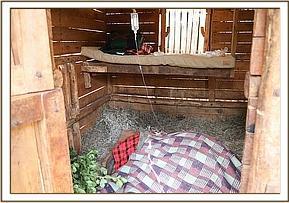 Maisha in ihrem Stall in Nairobi