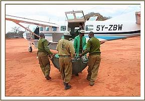 The keepers carrying the orphan to the rescue plane