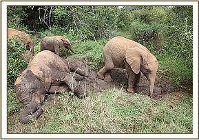 Quanza playing in the bush with the orphans