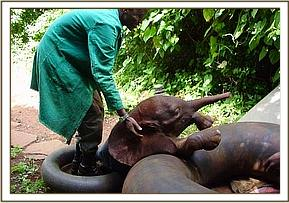 Sunyei playing with her tyre and Keepers