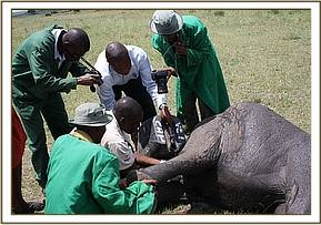 The Vet checks the severity of the injury