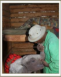 The calf bonding with Mishak once at the Nursery