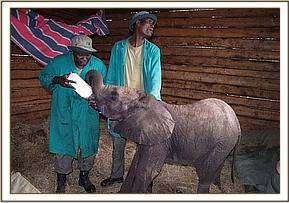 Naserian on arrival at the  DSWT nursery