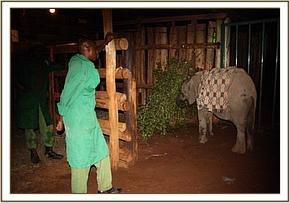 She arrives at the Nairobi Nursery at night