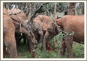 Tusuja unter den Waisen in Nairobi