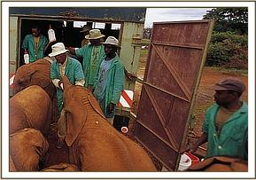 Icholta and co prepare to move to the Voi Relocation Unit 2001