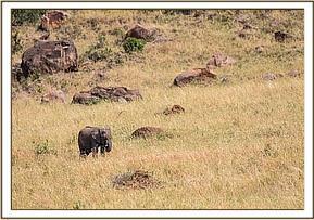 Sapalan einsam und verlassen in den Weiten der Maasai Mara