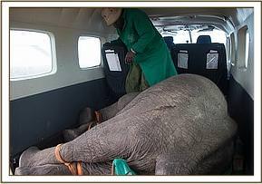 Sapalan im Rettungsflugzeug