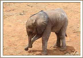 Ashaka playing with her trunk