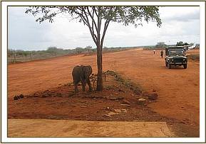 Ishanga at maktau airstrip after rescue