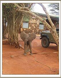 Ishanga waits at the KWS entrance gate while the rescue plane is arranged