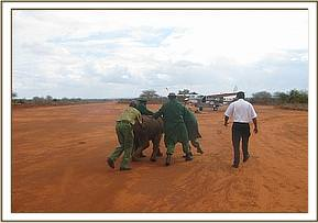 Ishanga being led to the plane