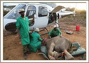 Sagala wird in Nairobi aus dem Helikopter geladen
